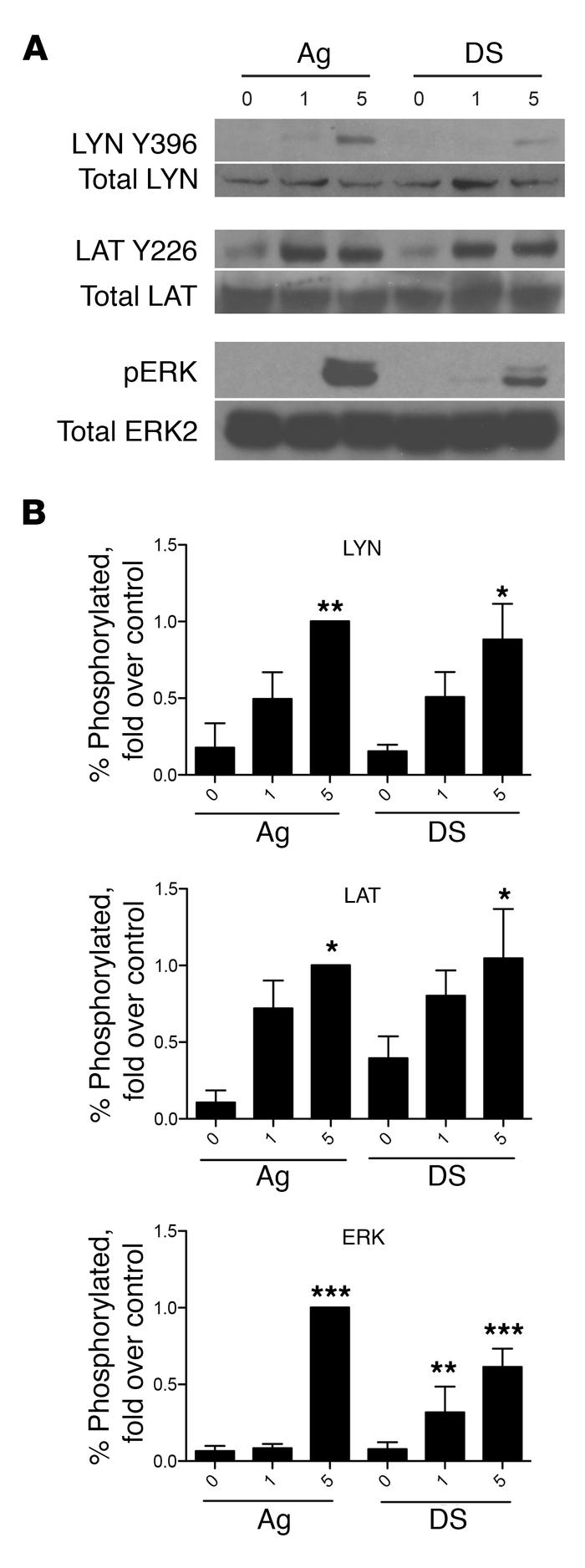 Desensitized cells have signaling responses to Ag. (A) 2 × 106 BMMCs per...