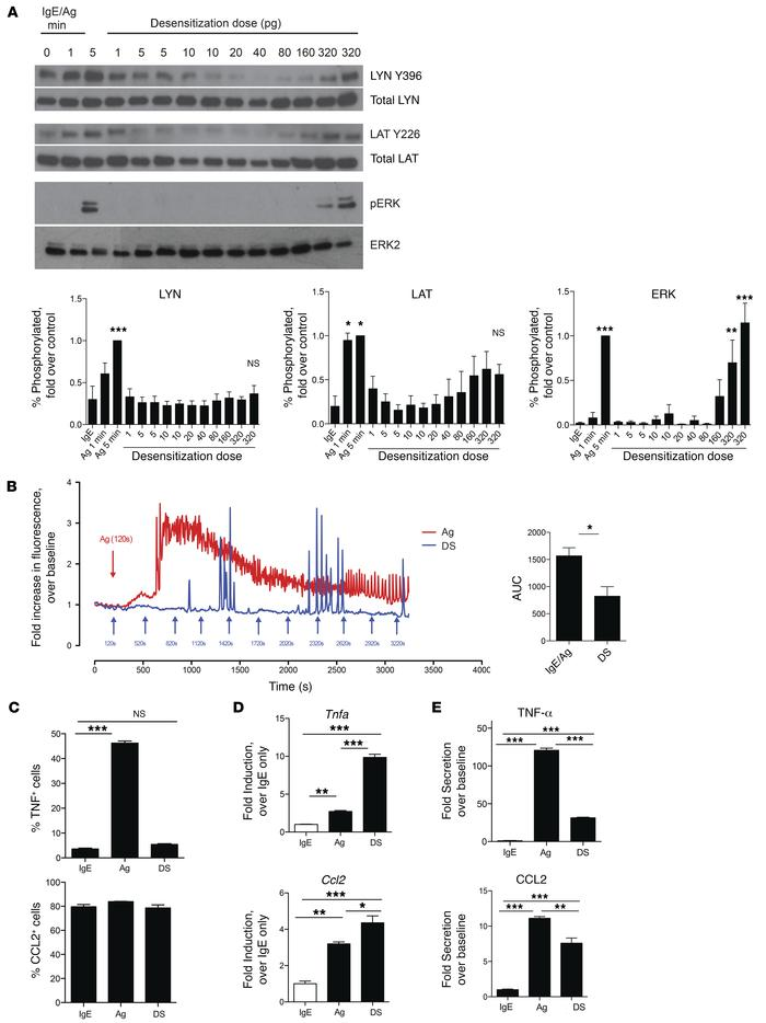 Signal transduction but no calcium mobilization during RDS. (A) 2 × 106 ...