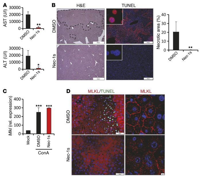 ConA-induced necrotic cell death depends on the kinase activity of RIPK1...