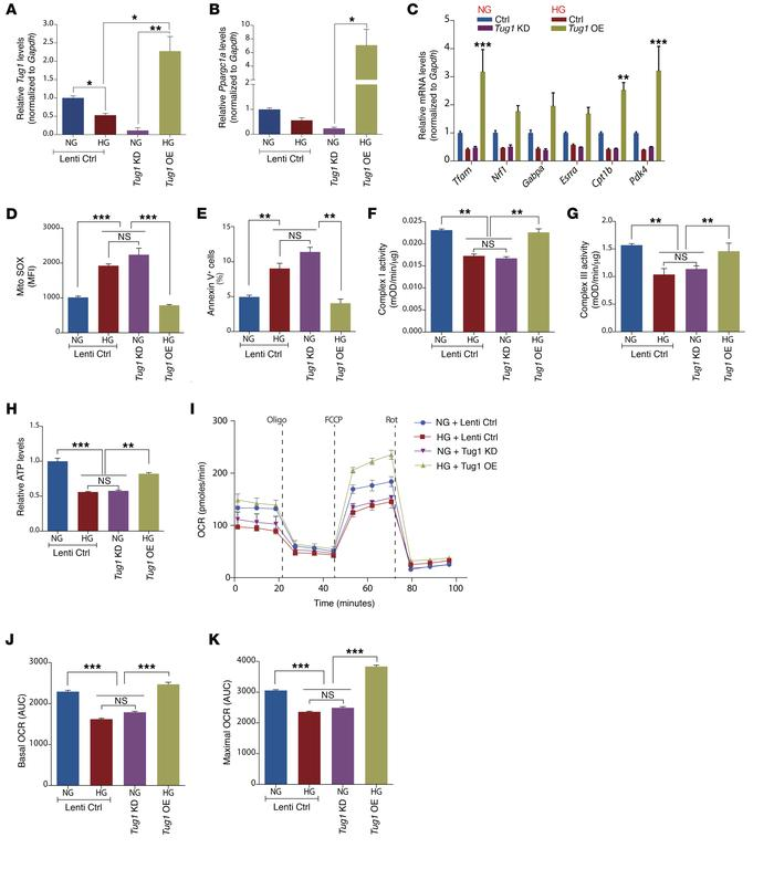 Tug1 modulates Ppargc1a mRNA and mitochondrial bioenergetics in vitro. ...