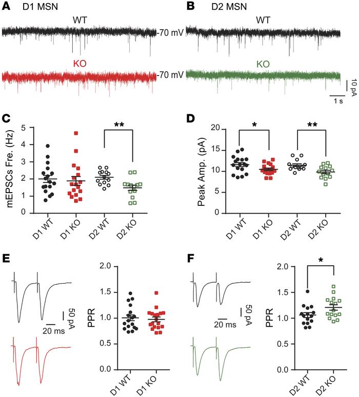 Differential effects of Shank3 deletion on glutamatergic synaptic transm...