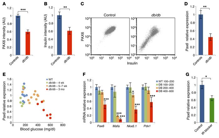 PAX6 expression in adult β cells from db/db mice and after treatment wit...