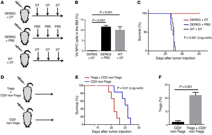 Treg depletion in DEREG mice leads to extended survival of Vk*MYC-inject...