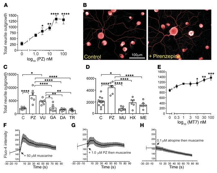 The M1R regulates neurite outgrowth from adult sensory neurons. (A) Neur...