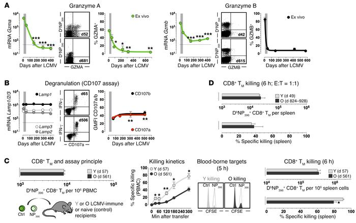Evolving functionalities of aging antiviral CD8+ TM: granzymes, degranul...