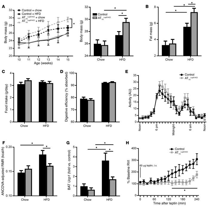 AT1ALepR-KO mice exhibit impaired responses to an HFD and leptin. (A–D) ...