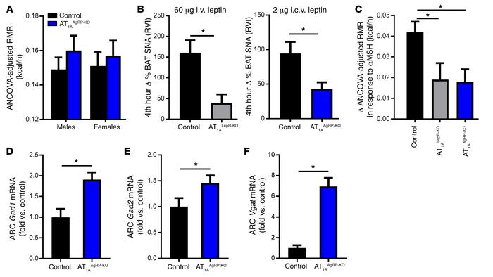 Effect of AT1A receptors on leptin-sensitive AgRP neurons. (A) Baseline ...