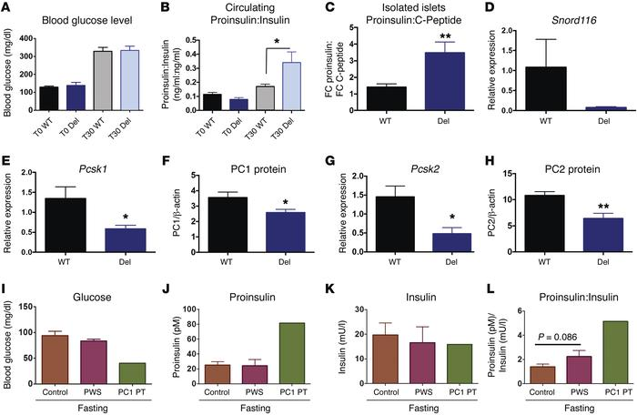 Proinsulin processing is impaired in Snord116p–/m+ (DEL) mice, and human...