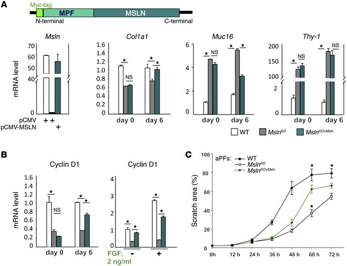 MSLN/MUC16 signaling regulates Thy-1/TGFβRI and AKT/FGFR1 pathways in aP...