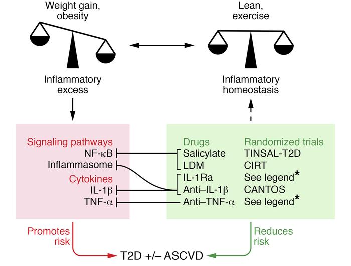 Clinical trials to target inflammation in T2D and ASCVD. Heightened infl...
