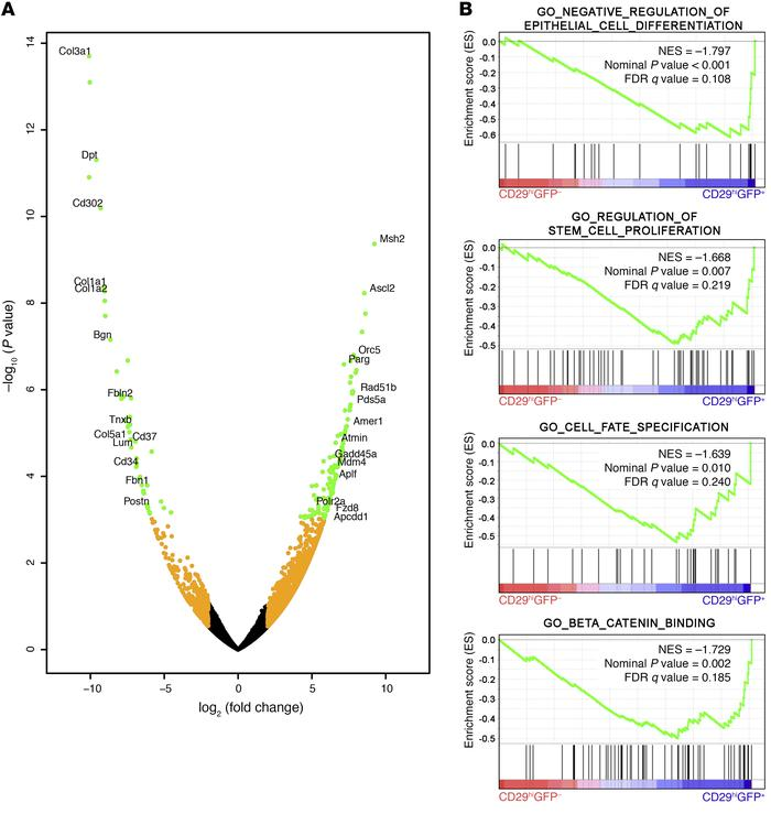 Krt15+ basal cells have a distinct transcriptional profile compared wit...