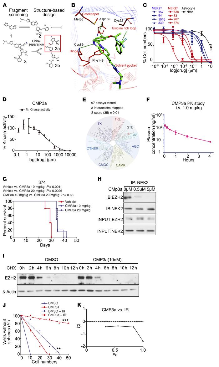 The NEK2 inhibitor CMP3a attenuates tumor growth and increases radiosens...