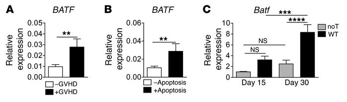 Intestinal GVHD is linked to BATF/Batf expression in humans and mice. (A...