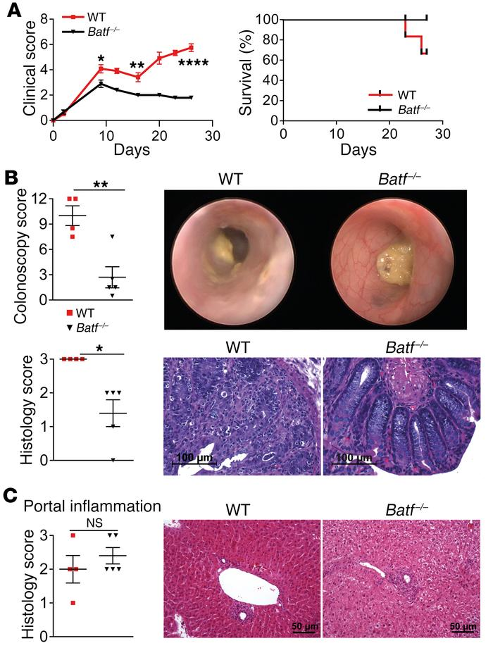 BATF-expressing T cells control intestinal but not hepatic GVHD in a miH...