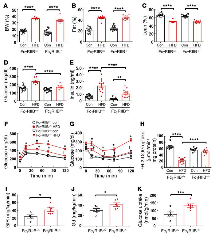 FcγRIIB–/– mice are protected from obesity-induced glucose intolerance a...