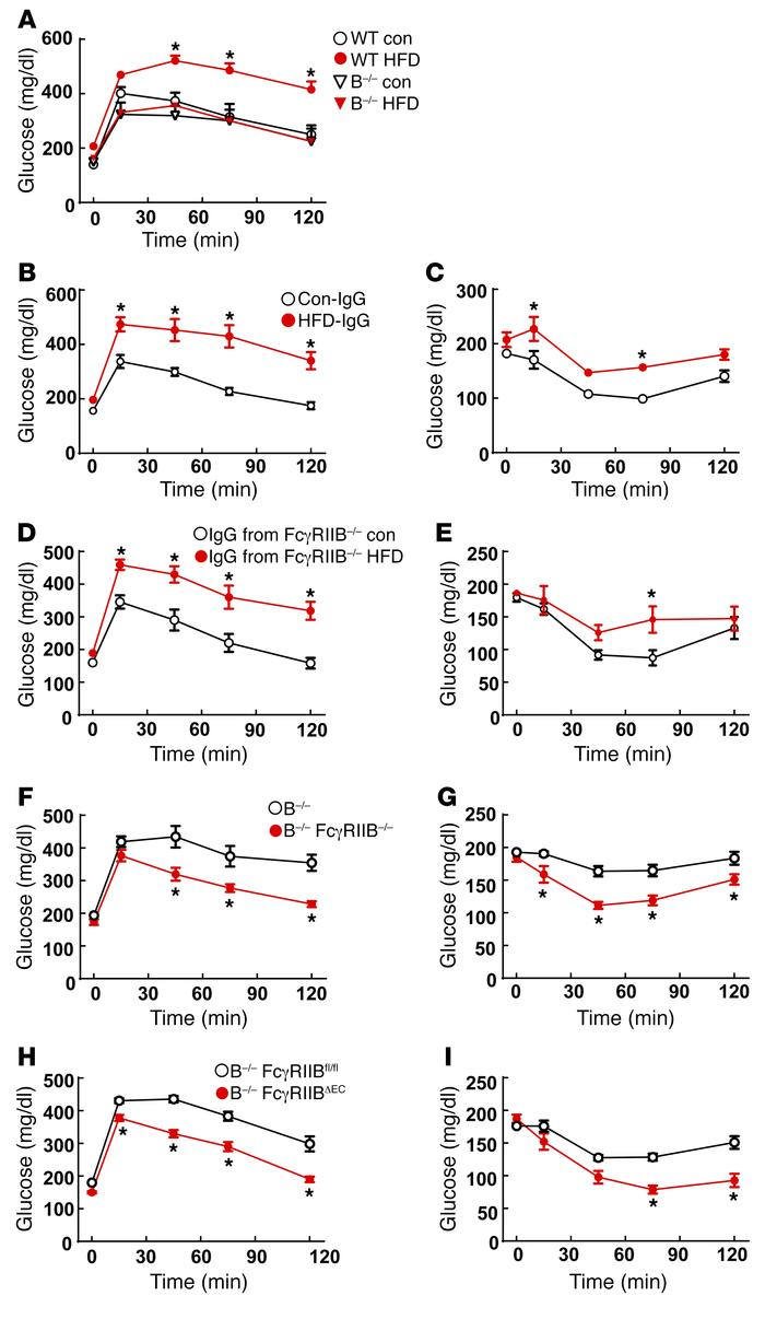 IgG isolated from HFD-fed WT mice induces glucose intolerance and insuli...