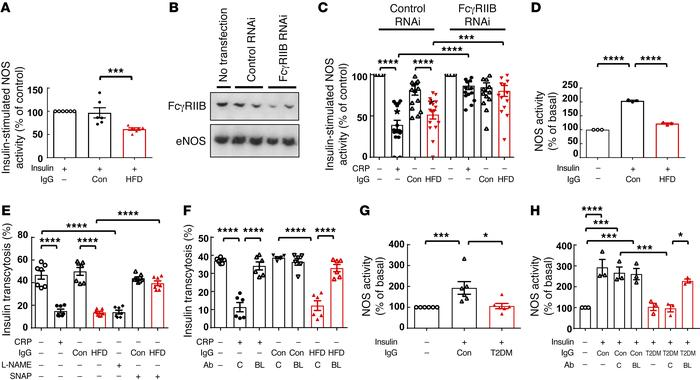 IgG from HFD-fed mice attenuates insulin-induced eNOS activation and tra...