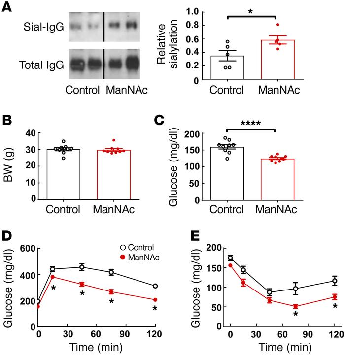 ManNAc treatment protects mice from obesity-induced glucose intolerance ...