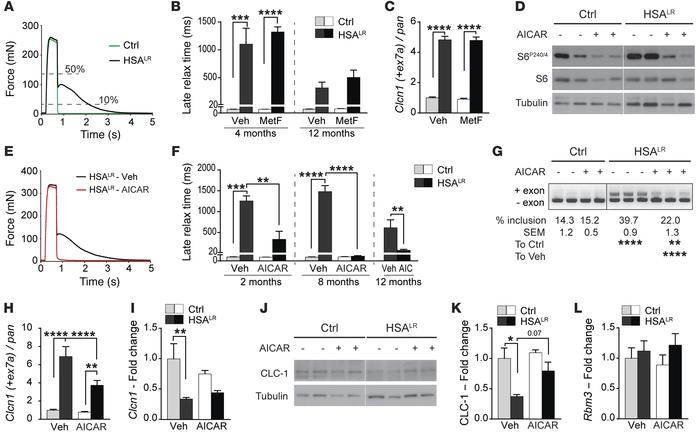 AICAR markedly decreases myotonia in HSALR mice and reduces mis-splicing...