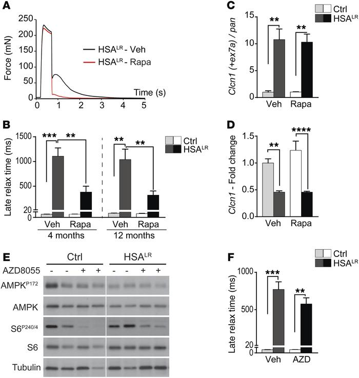 Rapamycin improves muscle function in HSALR mice via splicing-independen...