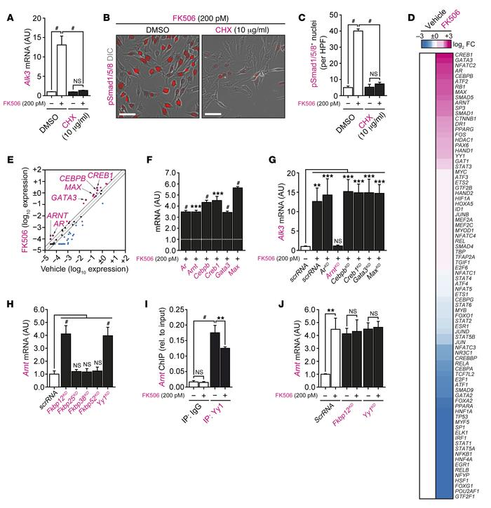 ARNT causally links disruption of FKBP12/YY1 complexes to enhanced ALK3 ...