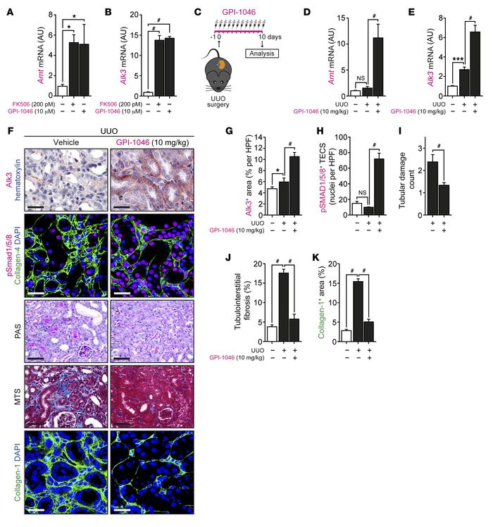 Selective targeting of FKBP12 by GPI-1046 effectively protects from chro...
