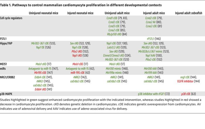 Pathways to control mammalian cardiomyocyte proliferation in different d...