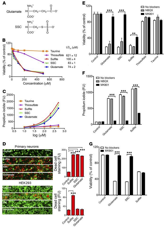 Sulfite toxicity in neuronal tissue is mediated by SSC activation of the...