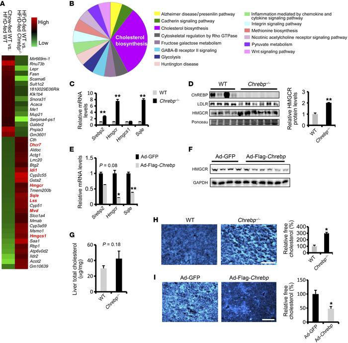 ChREBP protects mice from HFrD-induced liver injury via suppression of c...