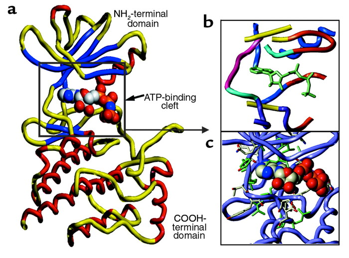 The crystal structure of AMP-PNP bound to Lck was used to made a model o...