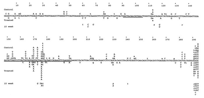 Pooled mutation analysis of all the clones obtained from the IgG VHBW-16...