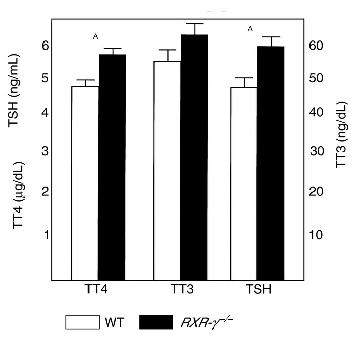 Serum TSH, T4, and T3 levels in littermate mice. Serum from eight WT mic...