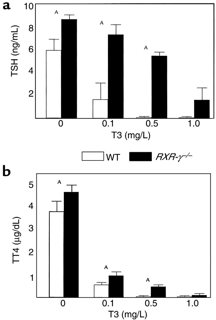 T3 suppression test in littermate mice. Serum from WT (open bars) and RX...