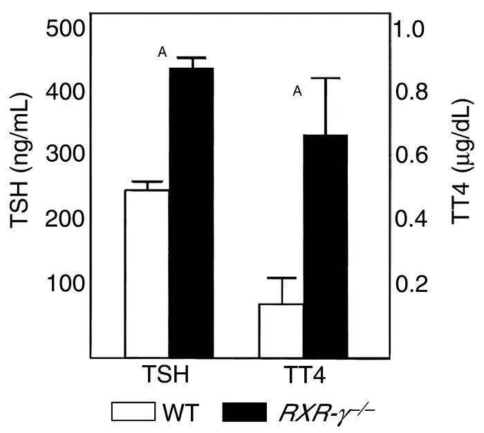 Serum TSH and T4 levels in WT and RXR-γ–/– littermate mice after radioio...