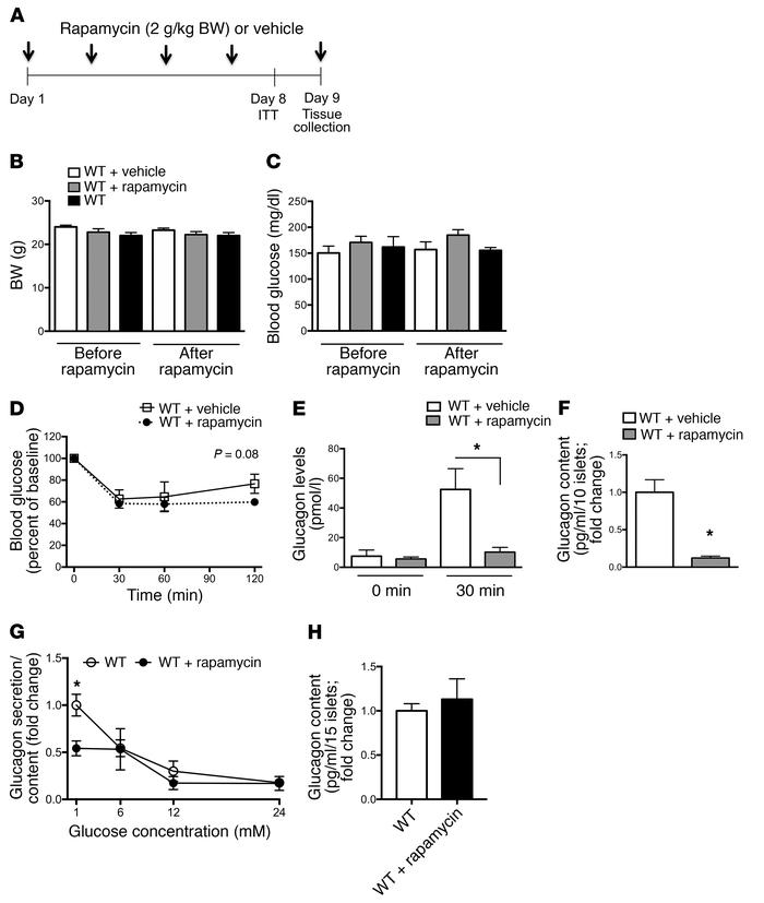 Rapamycin treatment in vivo inhibits glucagon secretory responses to hyp...