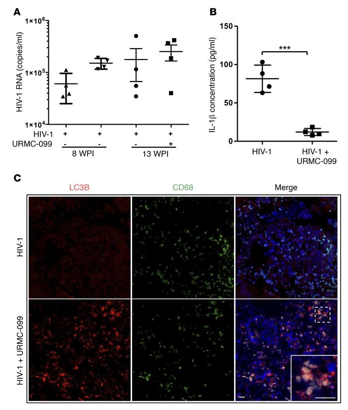 URMC-099 treatment in humanized mice. (A and B) Humanized NSG mice were ...