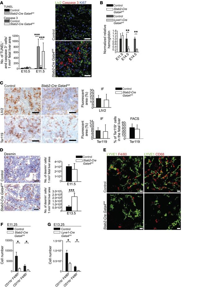 Liver endothelial GATA4 is required for the formation of the fetal hepat...