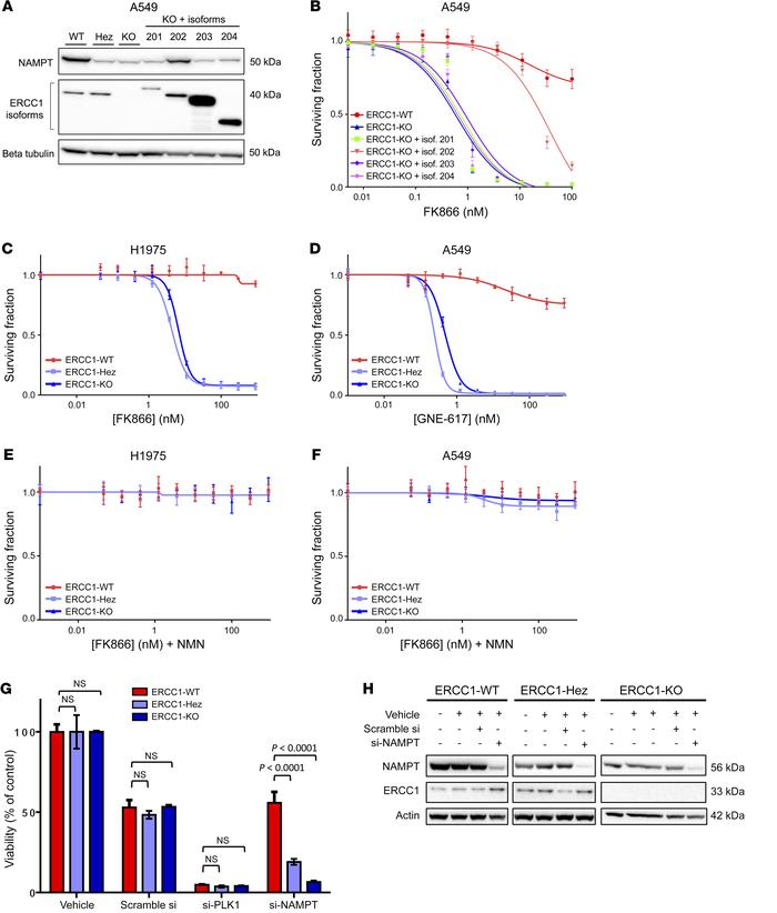 Exquisite sensitivity to NAMPT inhibition is a primary effect of ERCC1 d...