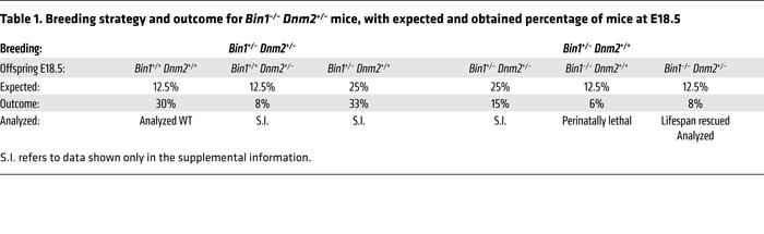 Breeding strategy and outcome for Bin1–/– Dnm2+/– mice, with expected an...