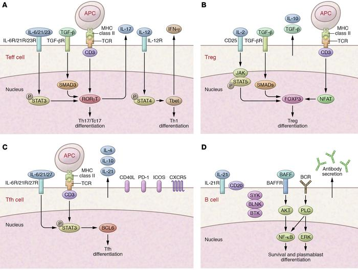 Cytokines and signaling pathways associated with the effector population...