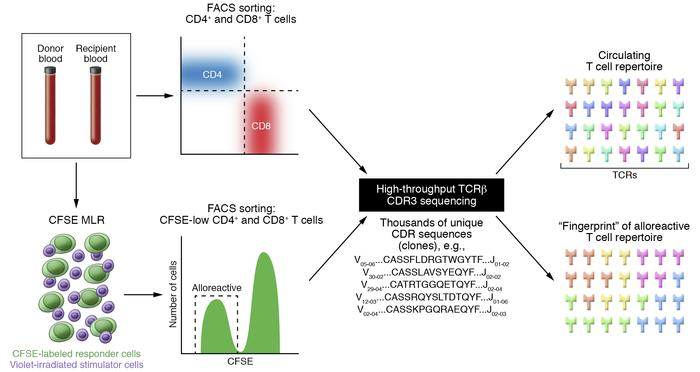 "Defining a ""fingerprint"" of the alloresponse via TCR sequencing. From pe..."