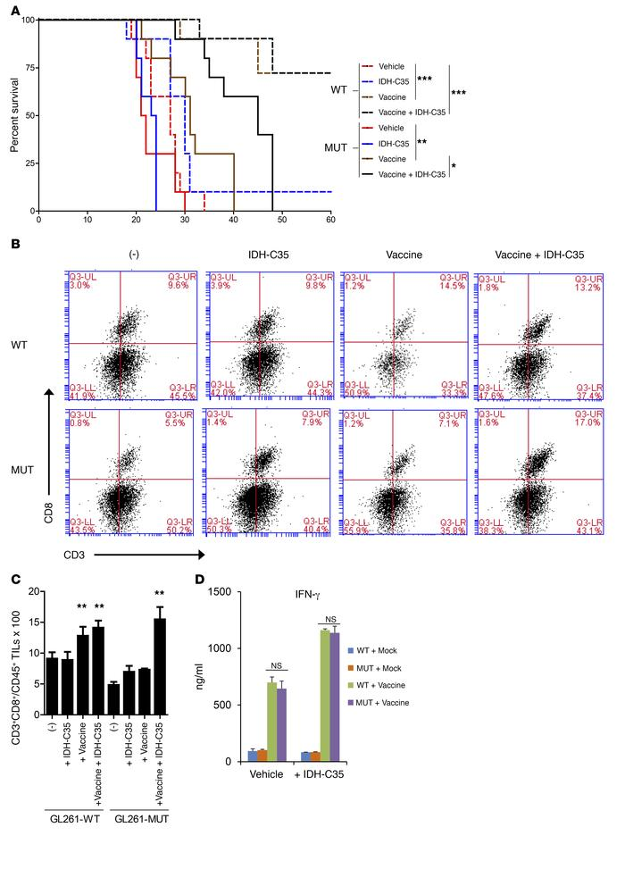 Treatment with IDH-C35 improves the efficacy of peptide vaccines in mice...