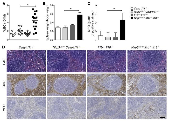 Role for caspase-1–dependent inflammatory mediators other than IL-1β and...