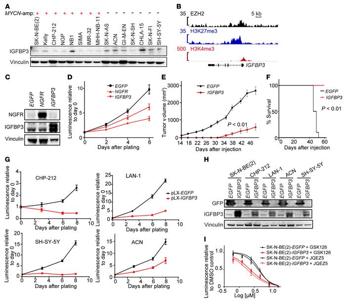 EZH2-regulated gene IGFBP3 functions as a neuroblastoma tumor suppressor...