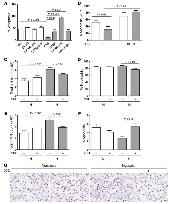 Glycolytic inhibition reverses hypoxic neutrophil survival and persisten...