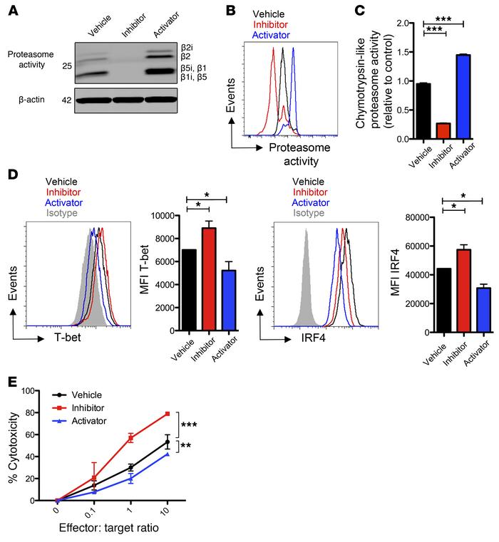 Modulation of proteasome activity influences CD8+ T cell function in vit...