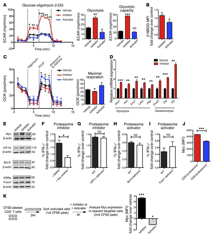 Proteasome activity levels in CD8+ T cells alters cellular metabolism in...
