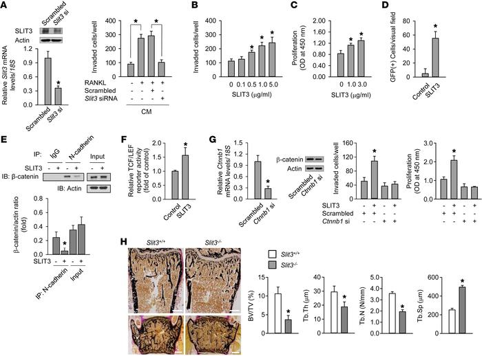 SLIT3 stimulates osteoblast migration and proliferation. (A) Quantitativ...