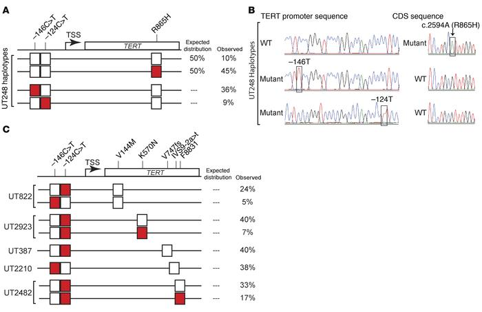 TERT promoter mutations are frequently found in cis with the WT TERT al...