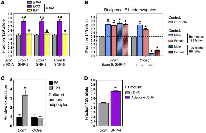 Ucp1 mRNA expression favors 129 over B6 transcripts due to cis-acting e...
